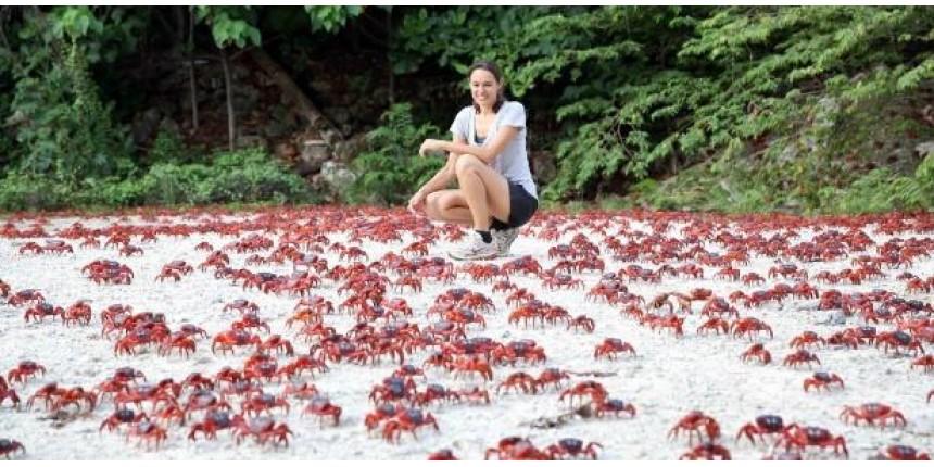 Cenário de filme de terror? A ilha que é tomada por milhões de caranguejos