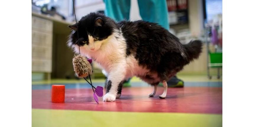 Gato volta a saltar depois de receber implante de patas traseiras