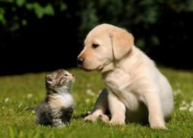 Gatos são tão inteligentes quanto cachorros, mostra estudo