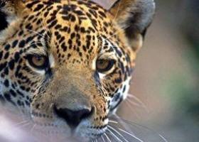 Projeto libera matança profissional e esportiva de animais no Brasil