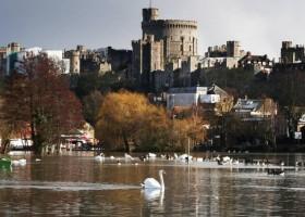 Cisnes da rainha Elizabeth são mortos a tiros em Windsor