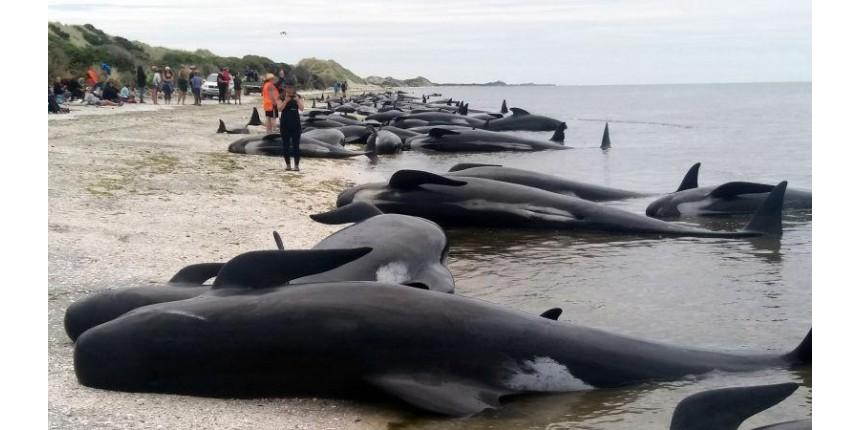 Os motivos pelos quais centenas de baleias morreram encalhadas na Nova Zelândia