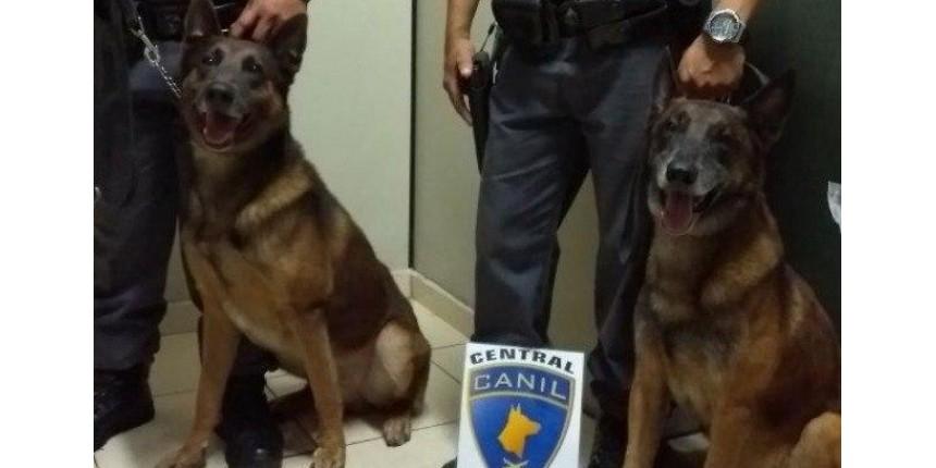 Além de seu melhor amigo, o cão Policial Militar salva e protege a sua vida