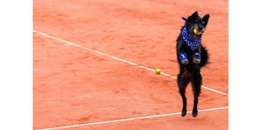 'Cãodulas' brilham em torneio internacional de tênis em São Paulo