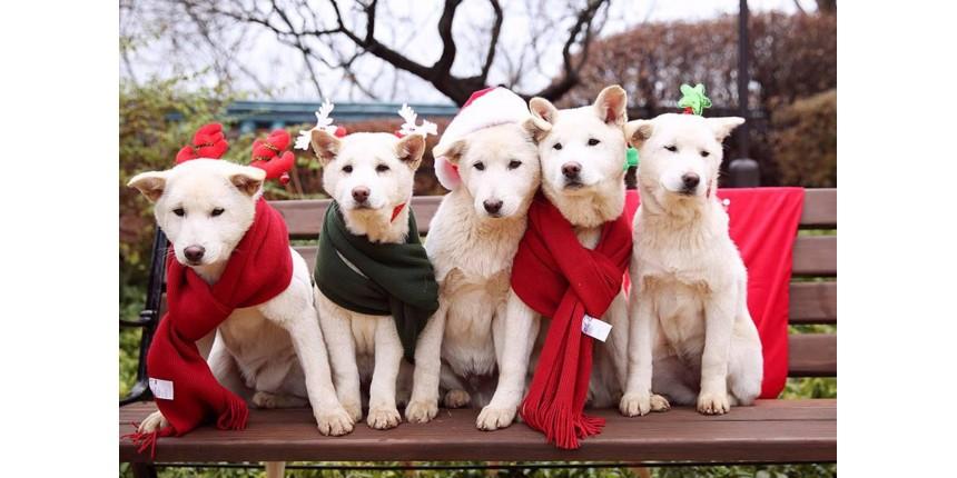 Ex-presidente sul-coreana é acusada de abandonar seus 9 cães