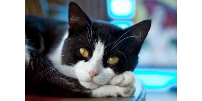 Gatos gostam mais de humanos do que de comida, revela estudo