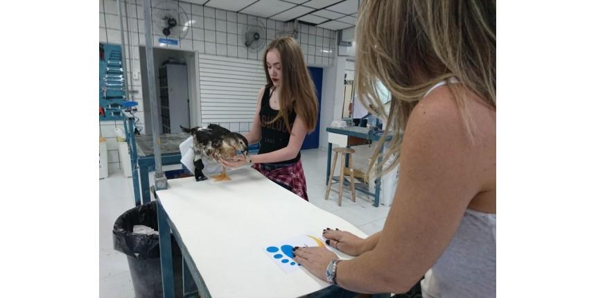 Pato ganha prótese no lugar de pata amputada após um ano vivendo em caixa