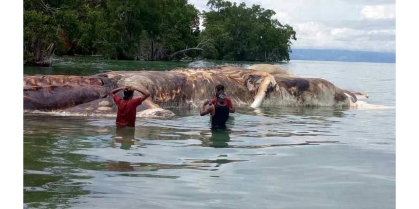 Criatura gigante é encontrada na Indonésia e moradores tentam desvendar mistério