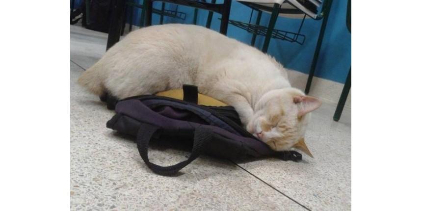 Entrevistamos o gato Branco, considerado o 'melhor aluno' em universidade de Santos