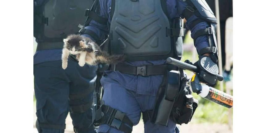 Gato arremessado durante protesto na Esplanada dos Ministérios pode perder a pata