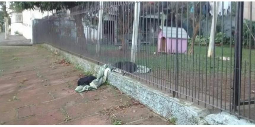 Cadela divide cobertor com cachorro de rua...
