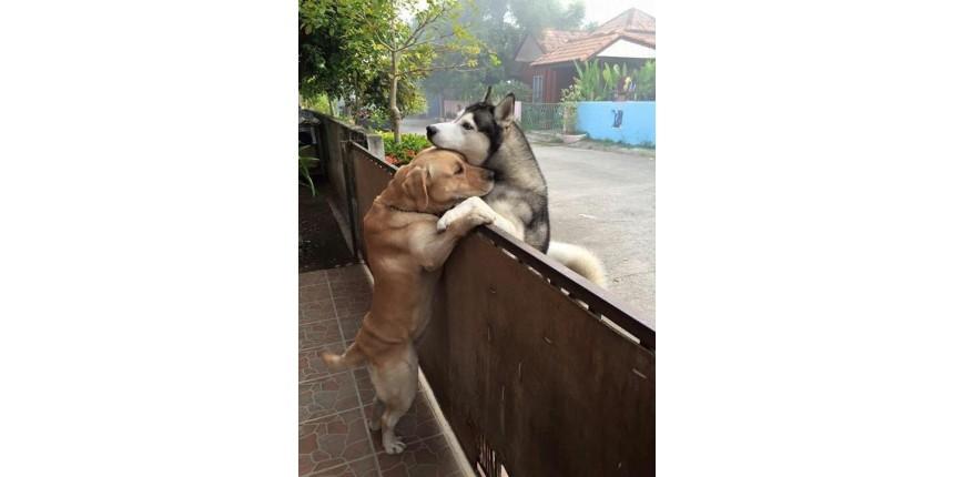 Cão solitário foge para abraçar amigo