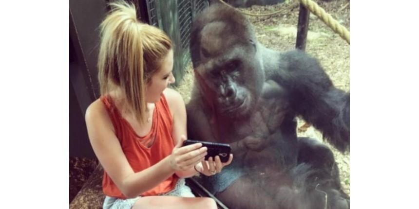 Jovem faz 'amizade' com gorila que gosta de assistir a vídeos no celular