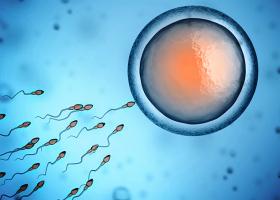 Queda na contagem de espermatozoides em homens pode levar à extinção humana,...