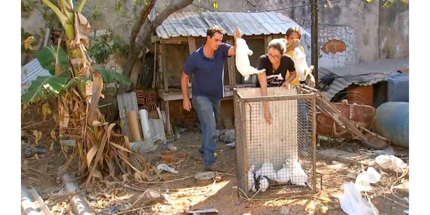 Animais em situação de maus-tratos são resgatados em Marília