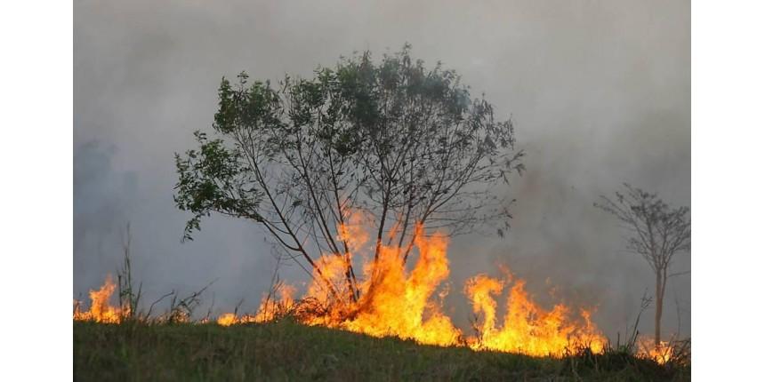 Brasil tem mês com maior número de queimadas da história