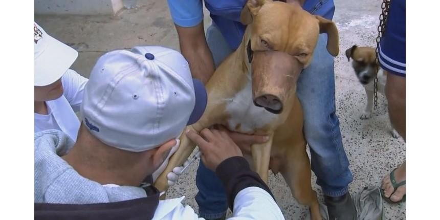 Secretaria de Saúde de Marília confirma 12º caso de leishmaniose