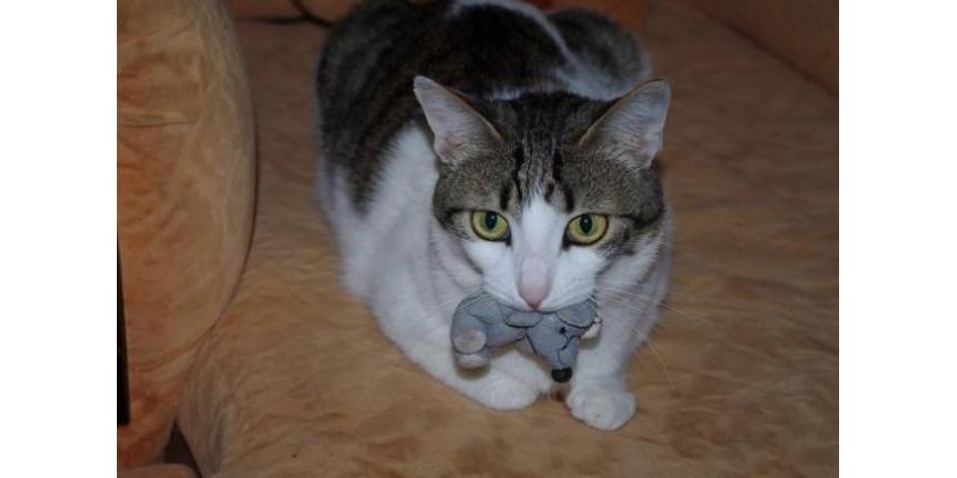 Abrigo de animais arranja emprego para gatos que não foram adotados
