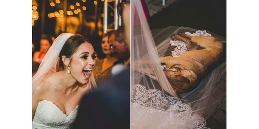 Cachorro invade casamento, deita no véu da noiva e é adotado
