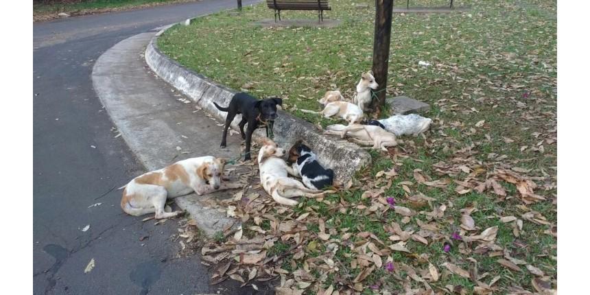 Cães são amarrados em poste e um deles morre enforcado