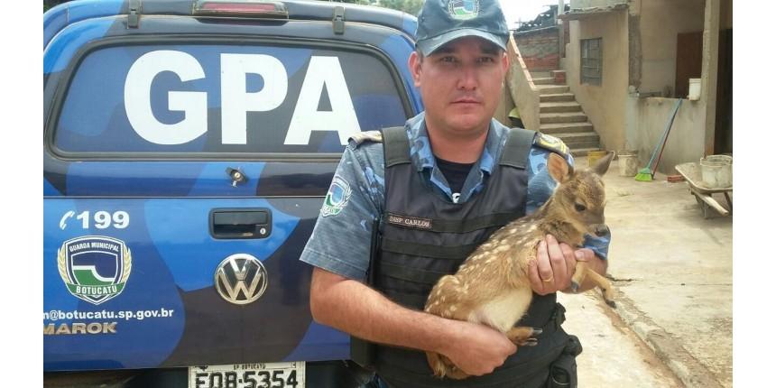 Filhote de veado é resgatado por motorista em rodovia