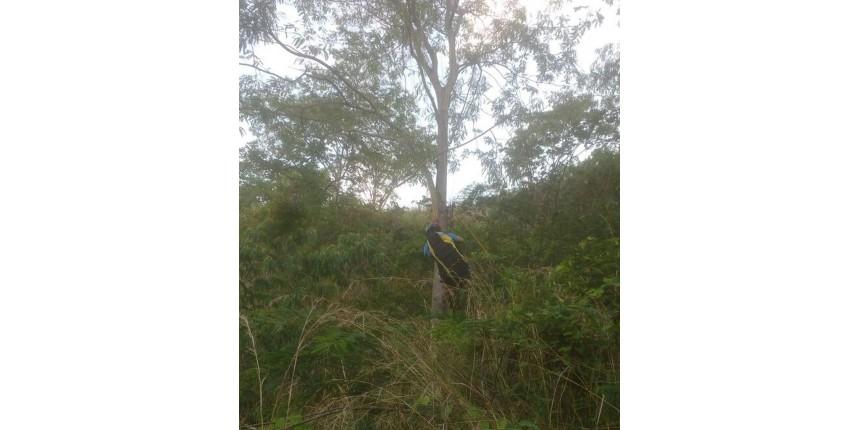 Parapente enrosca em árvore e bombeiros resgatam homem a 20 metros de altura