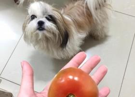Veterinária explica sobre benefícios da alimentação natural para cães