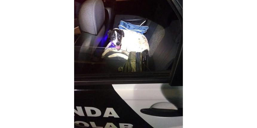 Cão se assusta com fogos e procura abrigo em viatura da PM