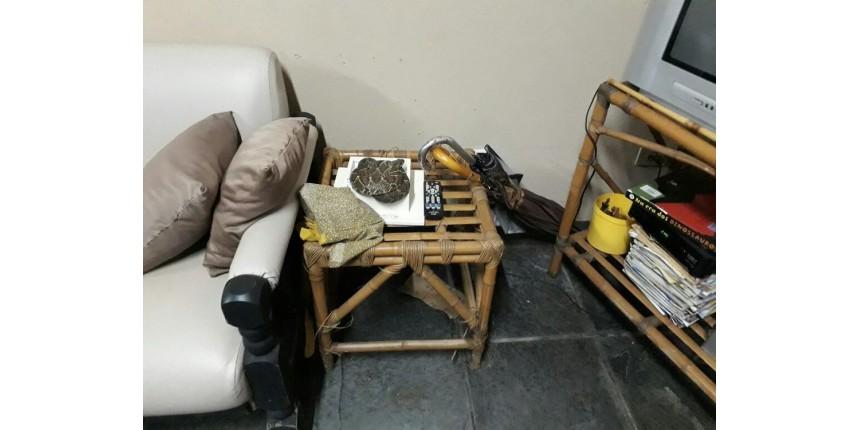 Cascavel 'se disfarça' de enfeite de mesa e surpreende moradores em Marília