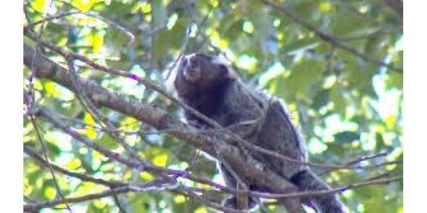 Mais um macaco é encontrado morto em estrada rural de Marília