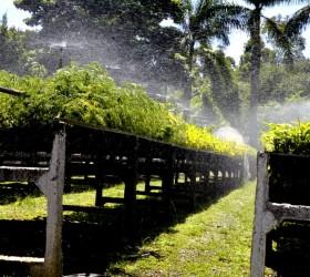 Prefeitura executa projeto de arborização urbana