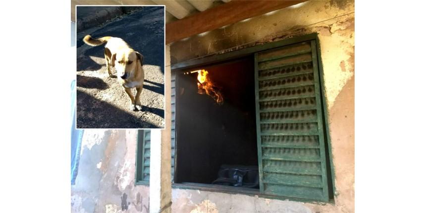 Cachorro 'avisa' vizinhos sobre incêndio e salva idosa que estava sozinha na casa