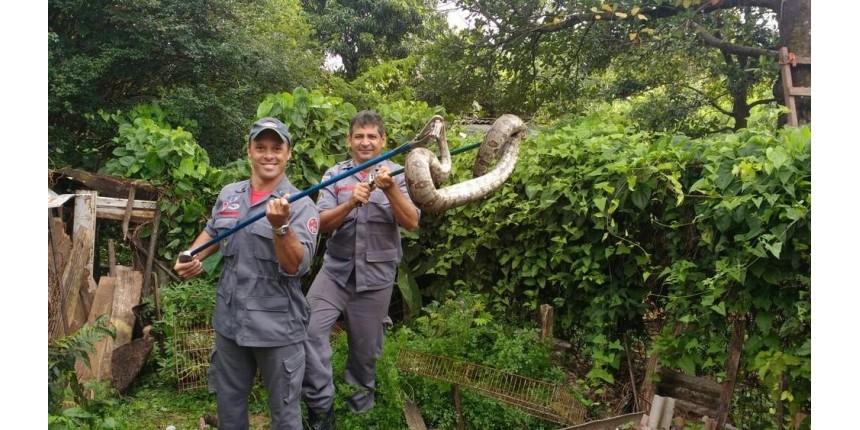 Com mais dois casos, Marília registra 80 cobras resgatadas em área urbana este ano