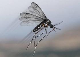 Febre amarela: vírus da doença é identificado em outros mosquitos