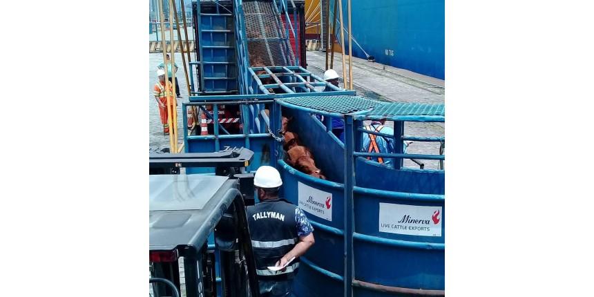 Justiça libera navio com bois vivos da Minerva Foods em Santos
