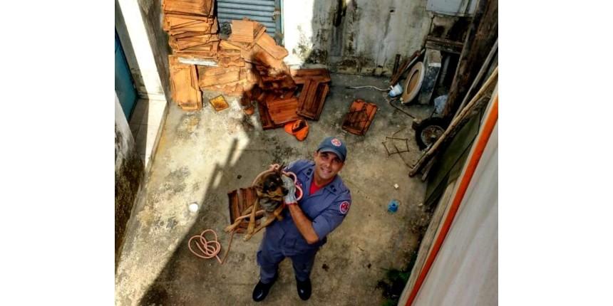 Cão jogado em prédio abandonado é resgatado pelos bombeiros em Marília
