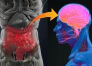 Como as bactérias que você carrega podem estar afetando seu...