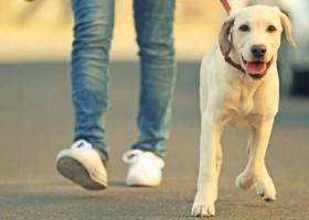 Por que o passeio é do cachorro, e não...