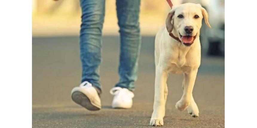 Por que o passeio é do cachorro, e não do dono!