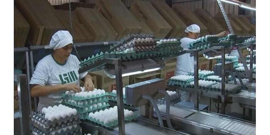 Protesto de caminhoneiros põe em risco produção de ovos em Bastos