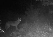 Mamíferos estão se adaptando à vida noturna para evitar o...