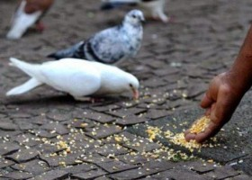 Prefeitura de SP determina multa para quem alimentar pombos