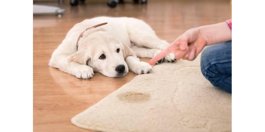 5 coisas que você talvez esteja fazendo errado ao dar bronca em seu cão