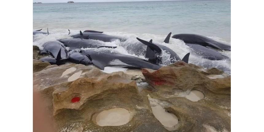 Caça de baleias pode ser autorizada hoje após 32 anos de proibição