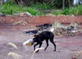 Policiais libertam cão que passou três dias com cabeça...