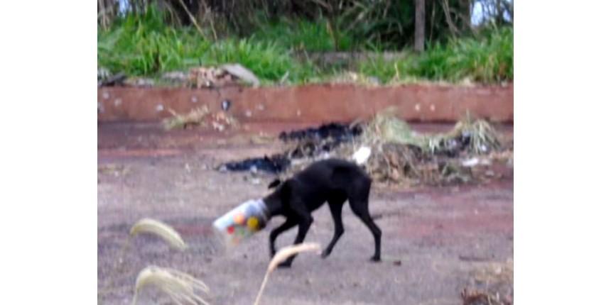 Policiais libertam cão que passou três dias com cabeça presa dentro de pote
