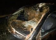Acidente com cavalos soltos em rodovia de Marília deixa quatro...