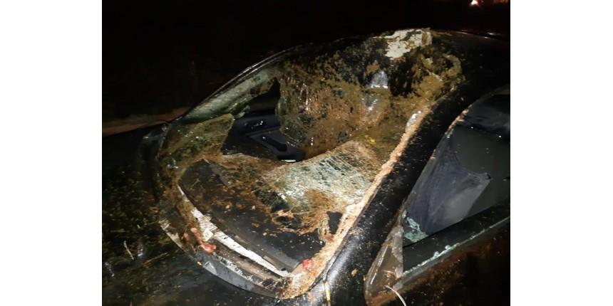 Acidente com cavalos soltos em rodovia de Marília deixa quatro pessoas feridas
