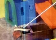 Cobra é achada entre brinquedos de creche no interior de...