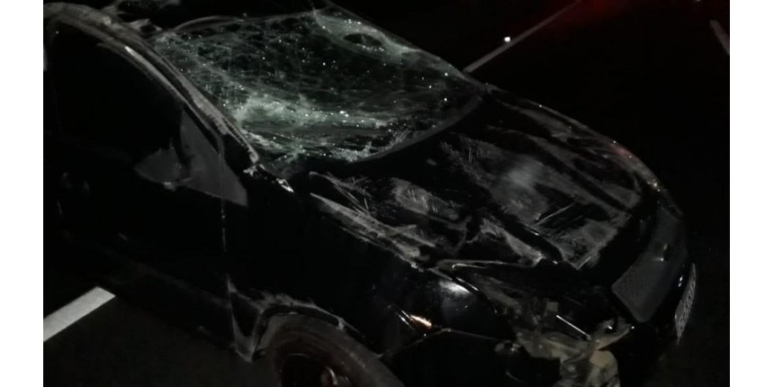 Motorista atropela cavalo solto na pista e atinge outros 4 veículos em Marília